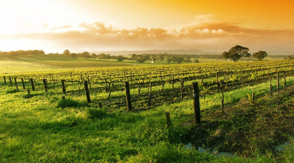 Top 10 Wine Regions to Visit in the World